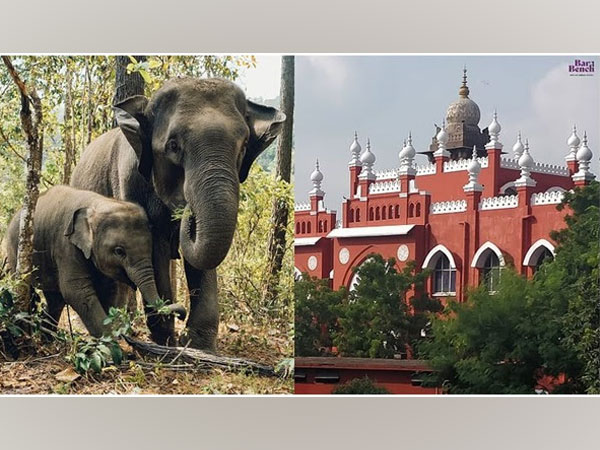 Elephants and Madras High Court