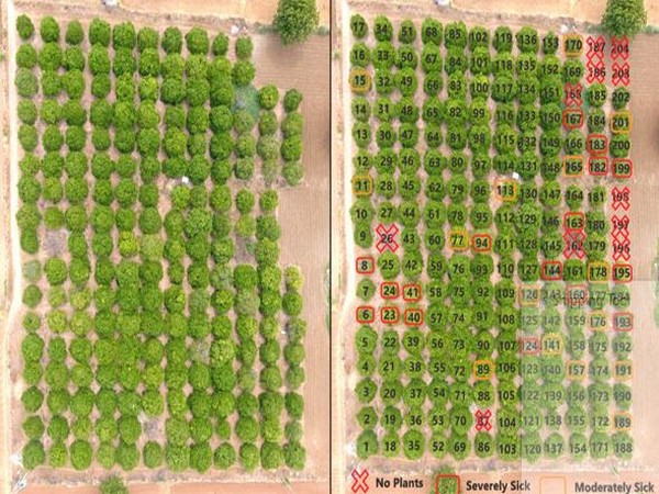 Snapshot from Samhitha's drones tracking crop health in real-time