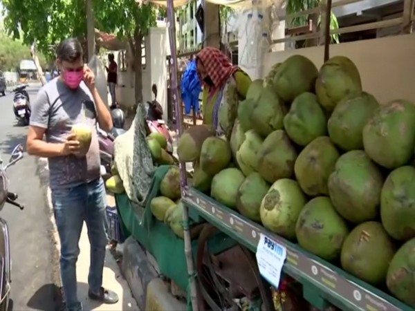 A coconut vendor's stall in Hyderabad on Friday. Photo/ANI