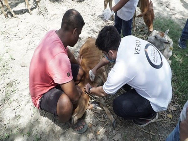 Animals getting treated at the veterinary camp in Assam