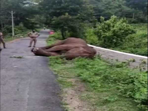 Injured elephant roaming around the border area of Tamil Nadu and Kerala dies (Photo/ANI)