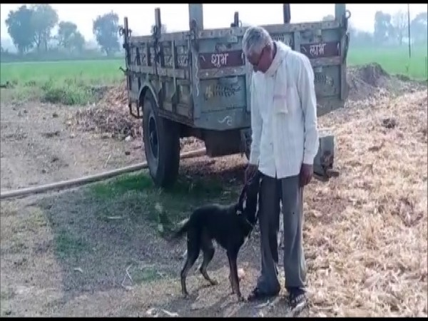 Madhya Pradesh farmer Om Narayan Verma has willed a part of his ancestral property to pet dog. (Photo/ANI)
