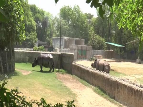 Rhinos sunbathing in the water sprinklers in Kanpur zoo. Photo/ANI